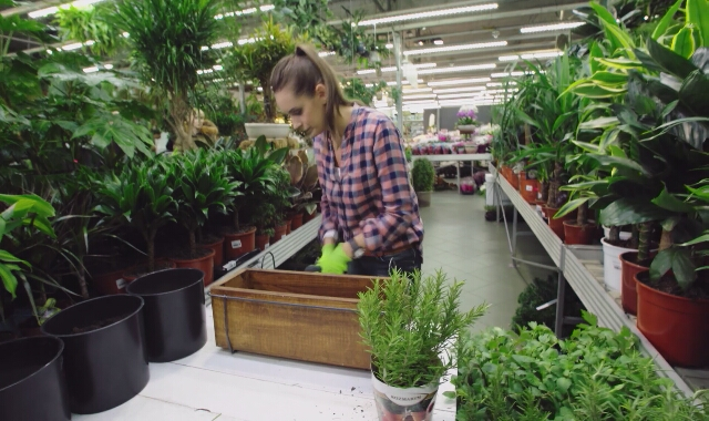 Jak prawidłowo sadzić zioła?
